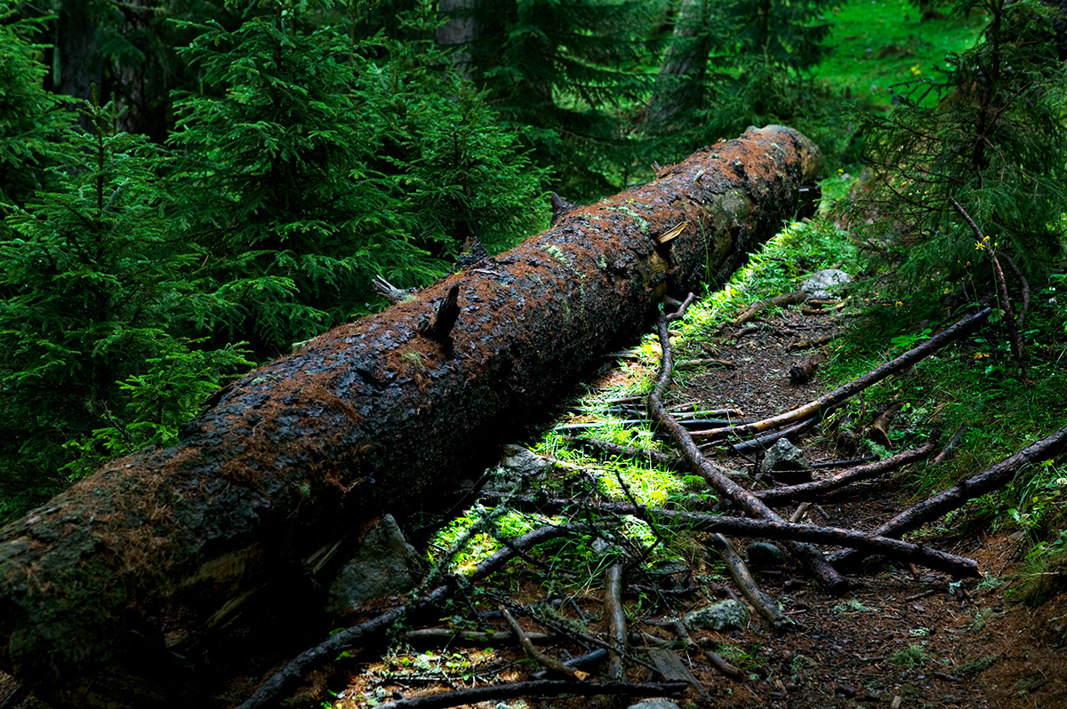 #11 La forêt, 2006