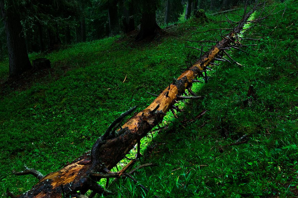 #14 La forêt, 2006