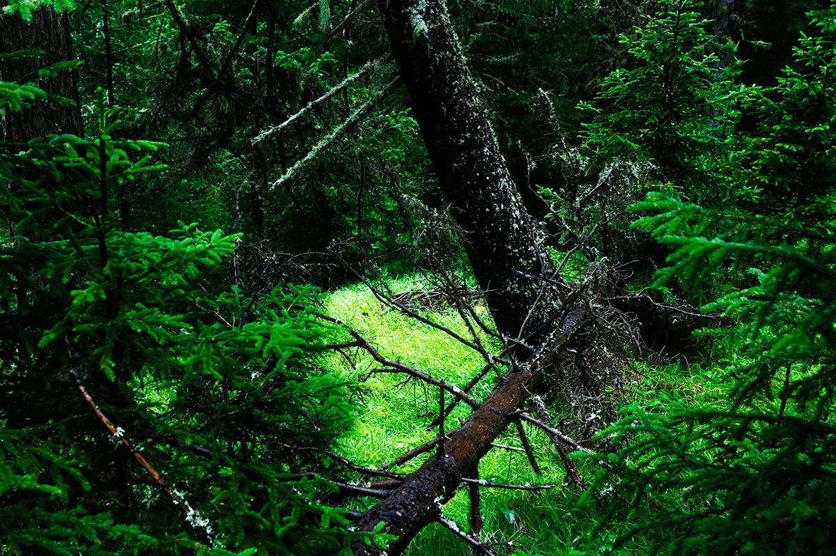 #15 La forêt, 2006