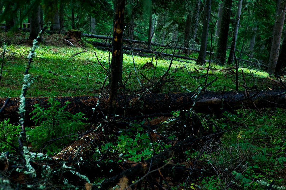 #16 La forêt, 2006