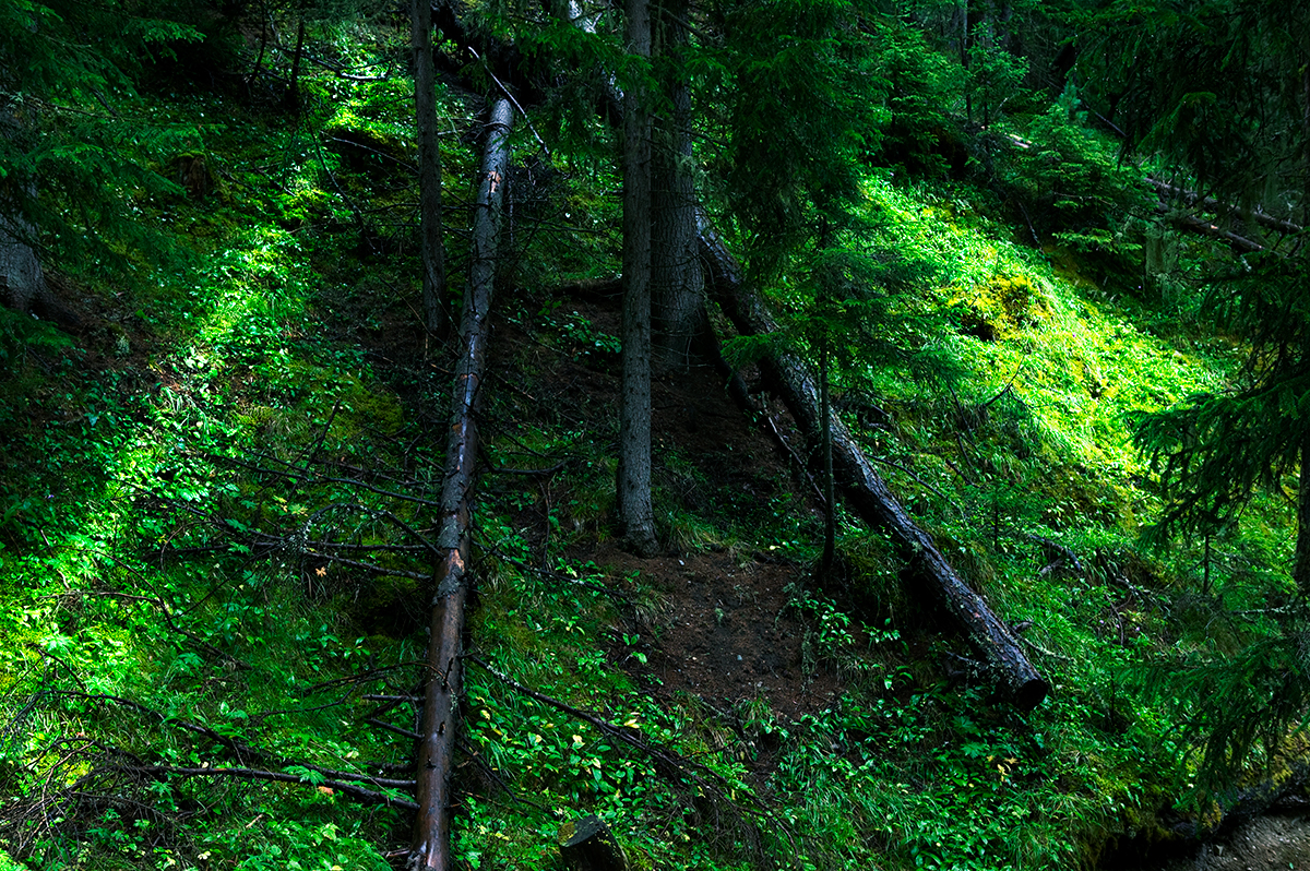 #03 La forêt, 2006
