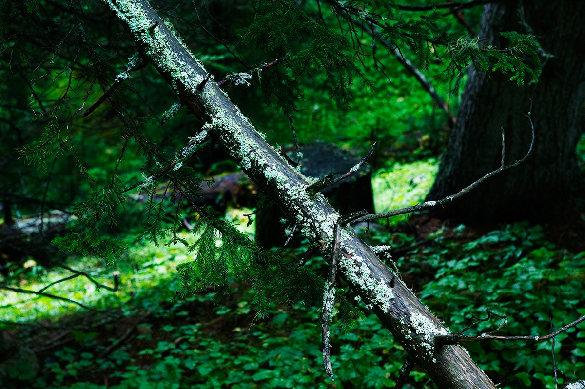 #05 La forêt, 2006