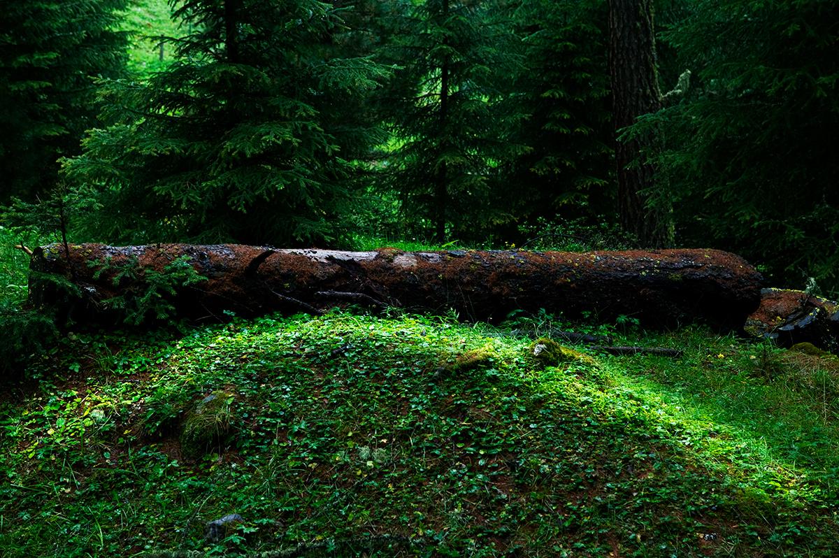 #06 La forêt, 2006