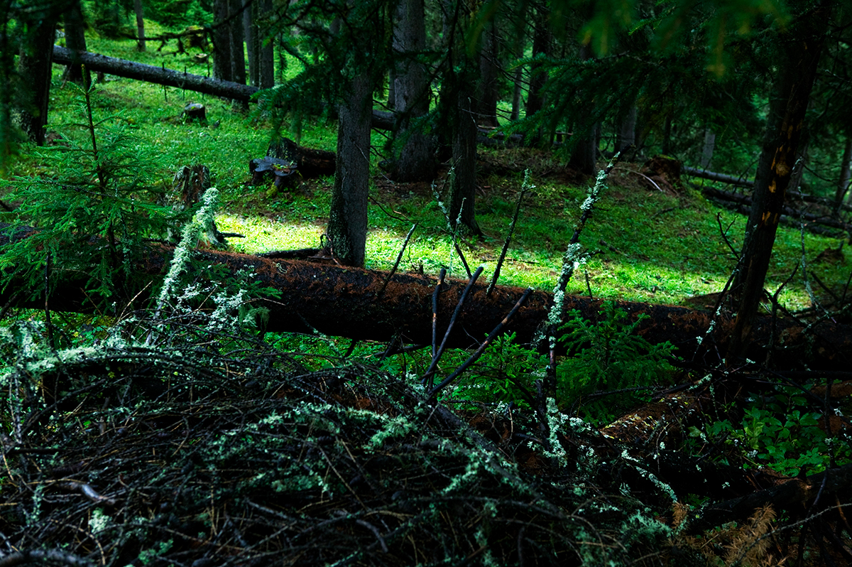 #07 La forêt, 2006