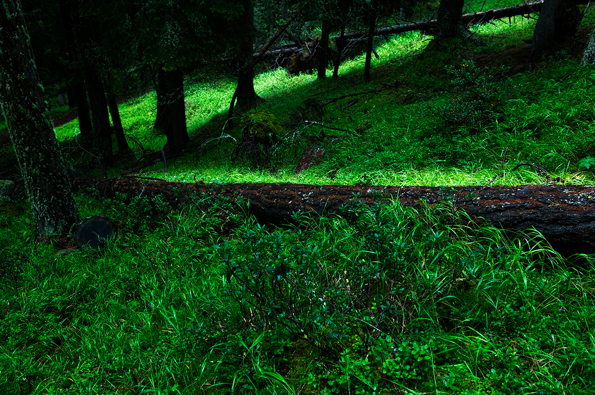 #08 La forêt, 2006
