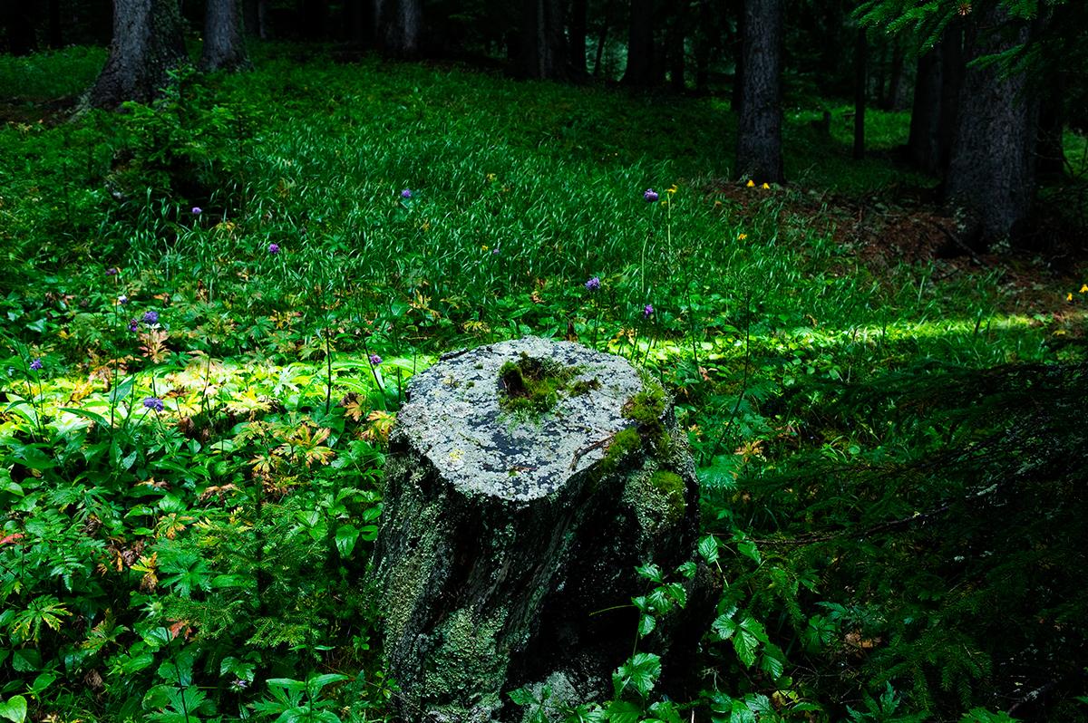 #09 La forêt, 2006